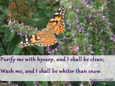 Psalm 51:7